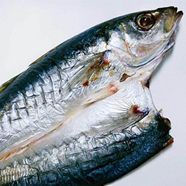写真:紀州ゆあさ魚義 梅塩の干物 青(丸)アジの開き