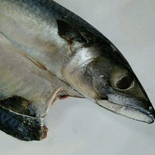 写真:紀州ゆあさ魚義 梅塩の干物 真サバの開き