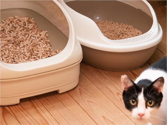 猫用トイレと猫の写真
